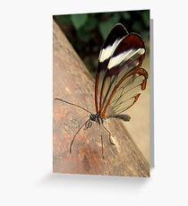 Glasswing Butterfly (G-clef proboscis) Greeting Card