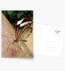 Glasswing Butterfly (G-clef proboscis) Postcards
