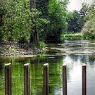 The Lake - Kew Gardens by Victoria limerick