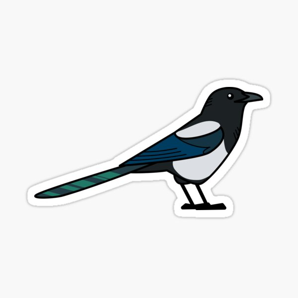 Black-Billed Magpie Sticker