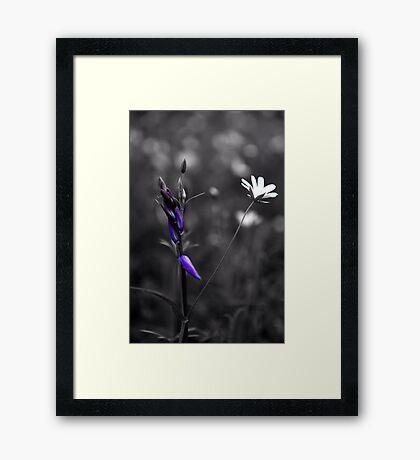Woodland Colour Framed Print