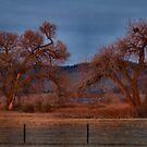 Early Morning Light - Scene 1 by Barb Miller