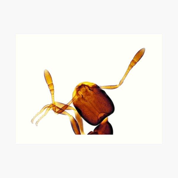 Tiny ant under the microscope Art Print