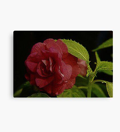 Double Impatience Flower, Color Engraving Canvas Print