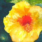 Hibiscus Dressed in Yellow by Sally Griffin