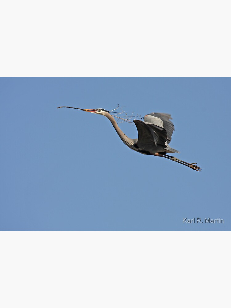 Blue Heron by SirEagle