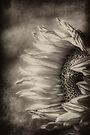 Petal Pusher Textured by Bob Larson