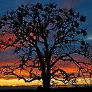 New Year Sunset by Nick Boren