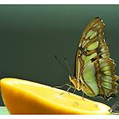 Butterfly Nectar by shell4art