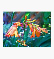 Colour cascade Photographic Print