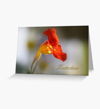 Nasturtium Greeting Card