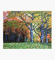 'Autumn Trees Along Bass Lake'  Photographic Print