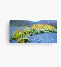 Moss Stone Canvas Print