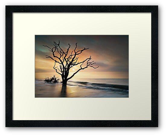 Boneyard Sunrise - Botany Bay, Edisto Island SC by Dave Allen