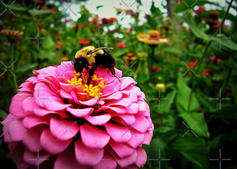 Pink Nectar  by FrankieCat