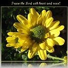 Preis den Herrn mit Herz und Stimme! Psalm 117 von BlueMoonRose