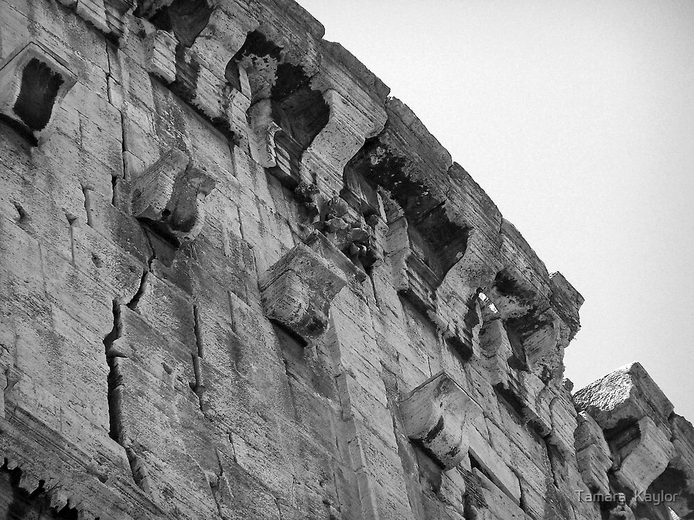 The Roman Colosseum - View #5 by Tamara  Kaylor