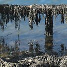 45 - SEAWEED AT SOUTH HARBOUR 2008 by BLYTHPHOTO
