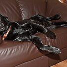 Would you pass me a cushion Shaun? by Shaun Whiteman