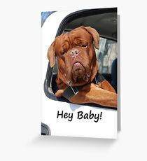 Greeting Card Dog Leaning Out of Car Greeting Card