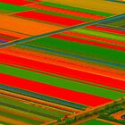 flower field by supergold