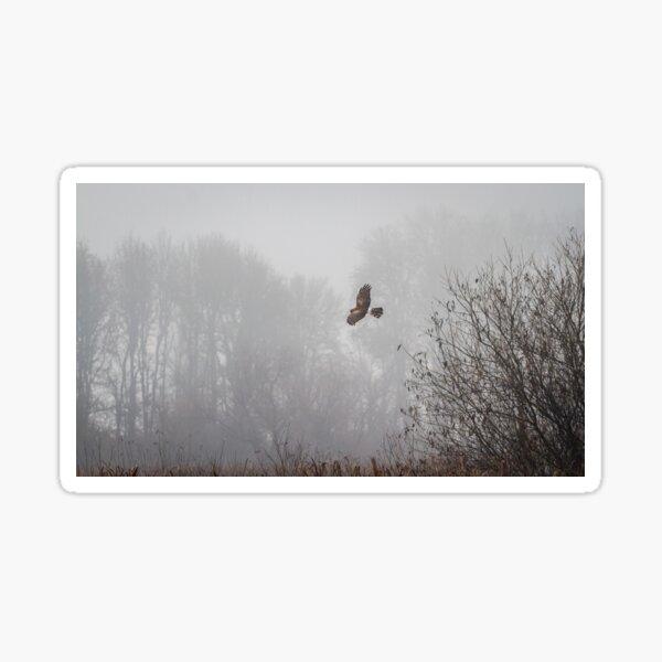 Northern Harrier Hunting in Morning Fog Sticker