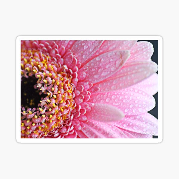 Macro photography of a pink flower Sticker