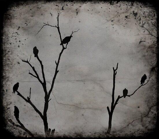 Black Birds by luckylarue