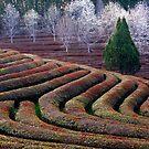Dawn At The Tea Farm by Bobby McLeod