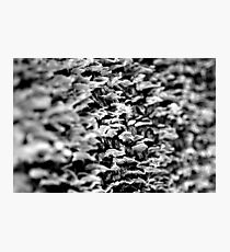 faux fungi Photographic Print