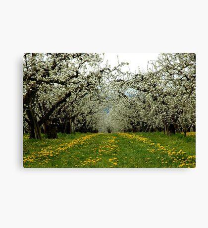 Hood River Blossom Landscape Canvas Print