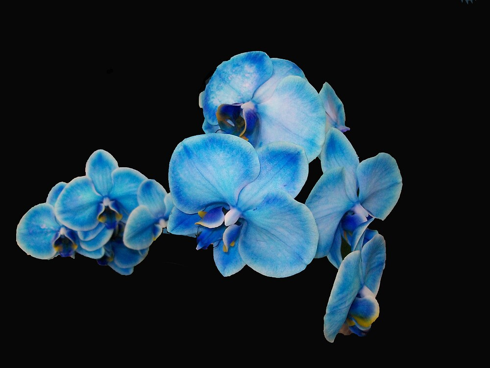 My Blue Orchid by Mary Ann Battle