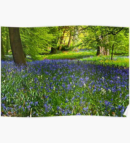 A Carpet of Bluebells Poster