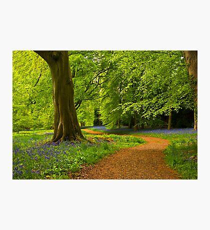 Woodland Path Photographic Print