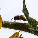 Bees, Bees, Talk to Your Bees! by DEB CAMERON
