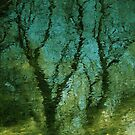 Summer Tree reflection by richard  webb