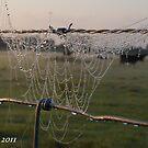 Dew drops by dhmielowski