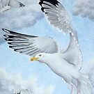 A Herring Gull in flight by aquartistic