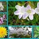 Signs of Spring by debbiedoda