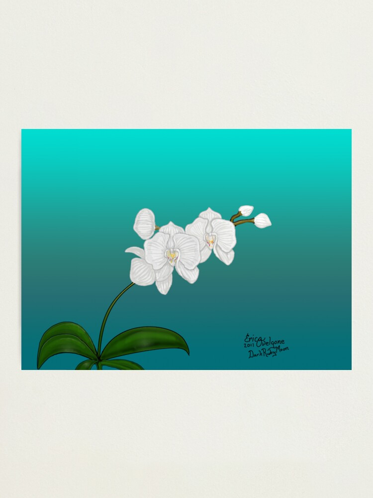 Alternate view of White Orchid Photographic Print