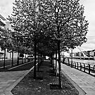 Trees on path  next to the river Liffey Dublin by Paul  Sloper