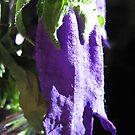 Purple Bell by mjparsons