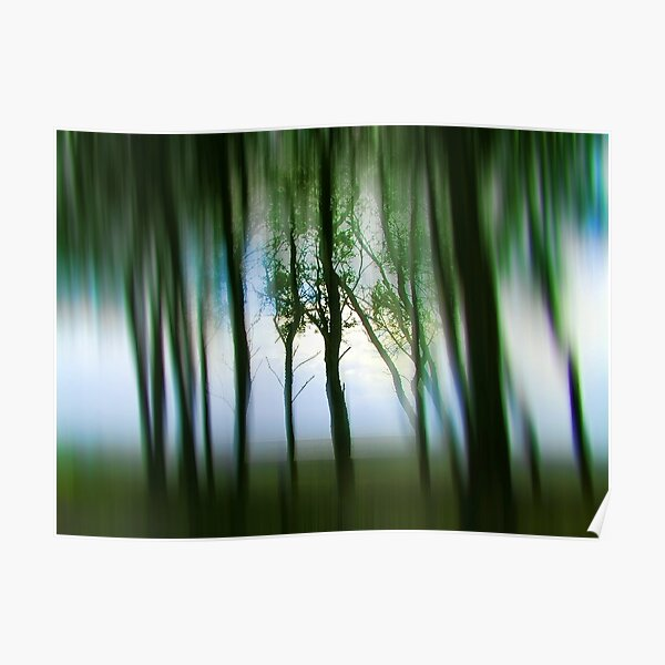 Morning Tree Silhouettes Poster