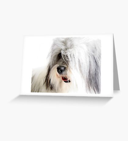 Coton De Tulear Greeting Card