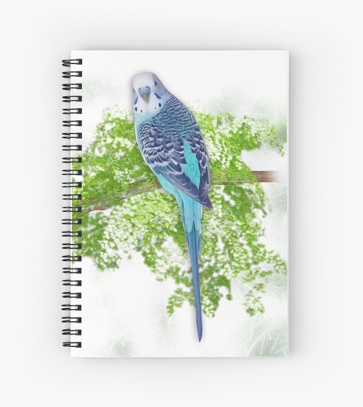 Blue Budgie on Green by DolphinPod