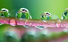 Drops of Green by yolanda