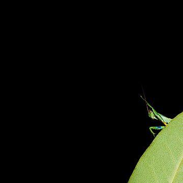 Mantis by AnnabelHC