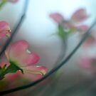 The Rain Finds Me Dreaming Of Spring  by Ainsley Kellar Creations