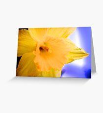 Silken spring petals Greeting Card