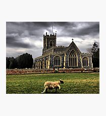 Banished From The Flock Photographic Print
